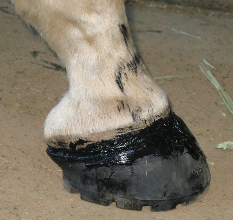 how to make glue from horses